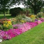 strimmer_flower_border