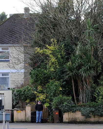 overgrown-tree