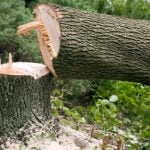 How to Go About Limbing a Tree with a Chainsaw