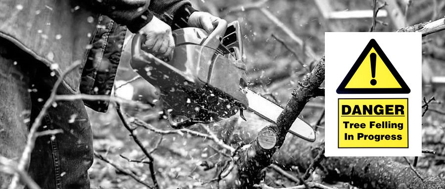 what is the best chainsaw