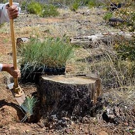 manual tree stump removal